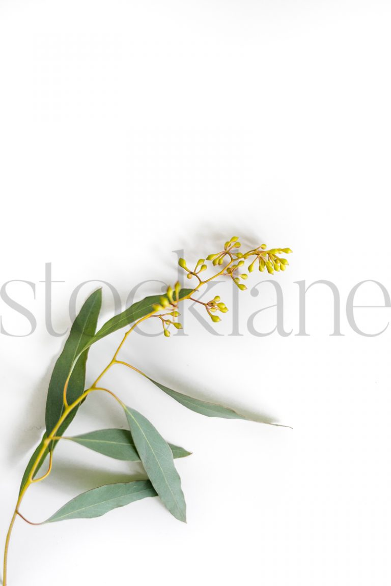 Vertical stock photo of flowers