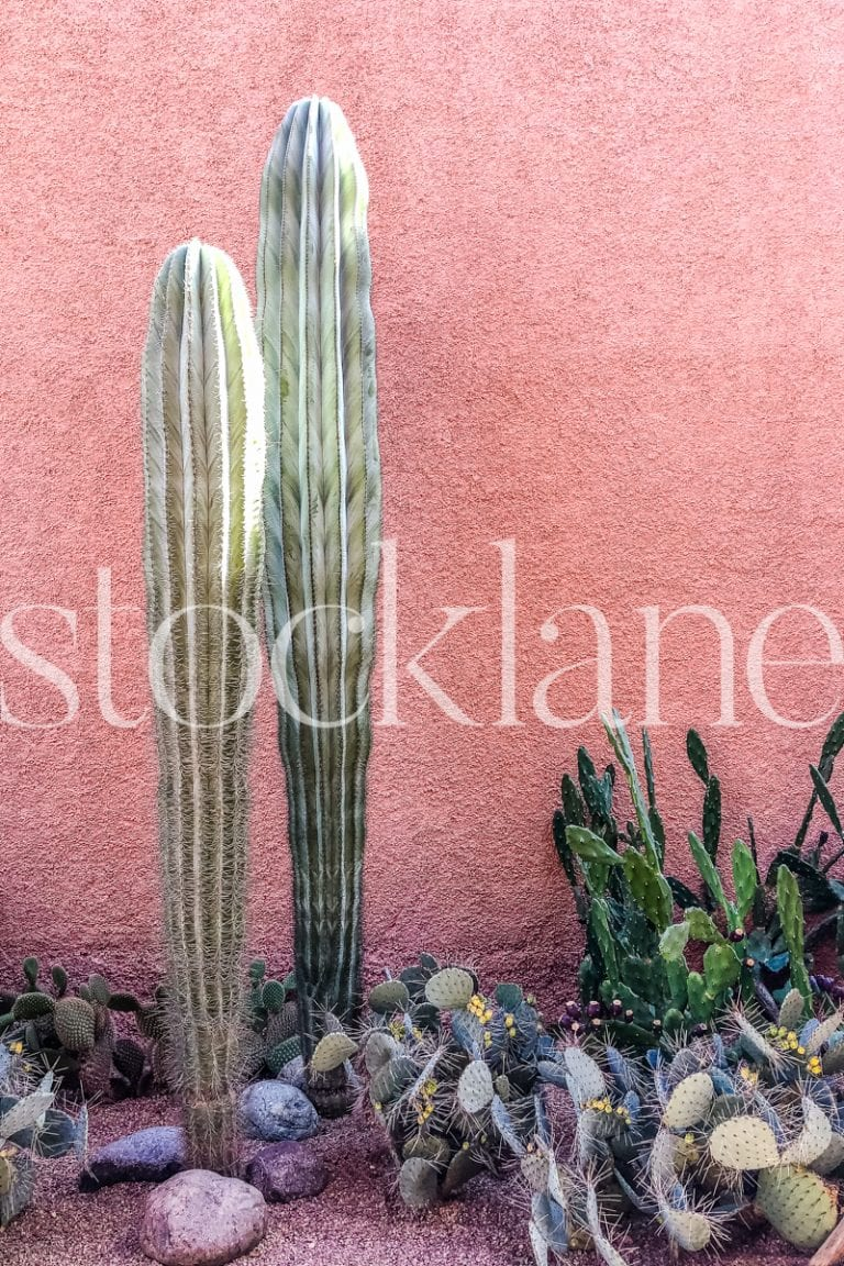 Vertical Stock Photo of cactus in front of pink wall