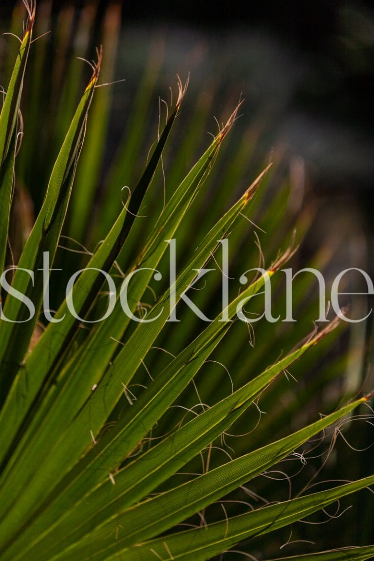 Vertical stock photo of palm leaves