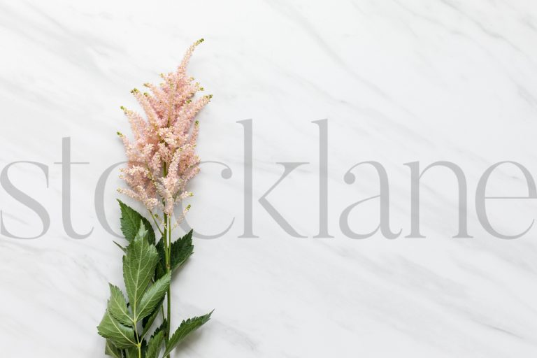 Horizontal stock photo of pink flower