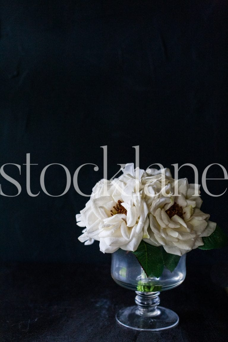 Vertical stock photo of white flowers in black background