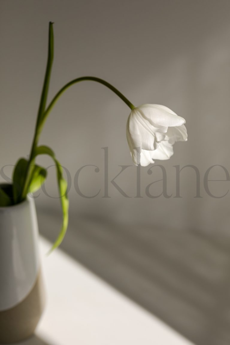 Vertical photo of flower in vase