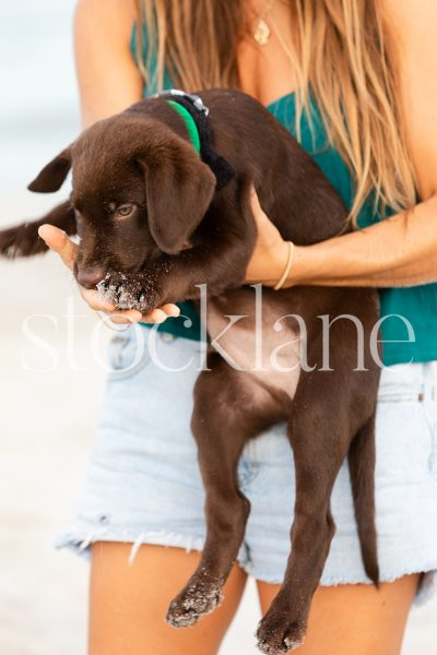 Vertical stock photo of a woman holding a chocolate labrador puppy at the beach.