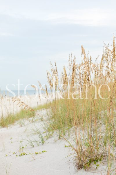 Vertical stock photo of beach seagrass.