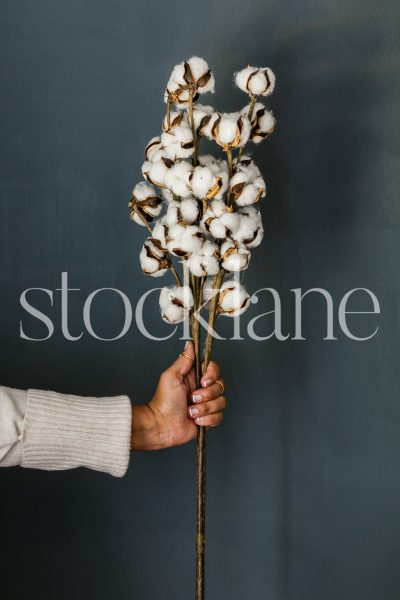 Vertical stock photo of a woman holding a cotton branch.