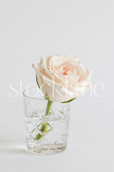 Vertical stock photo of a pink rose.