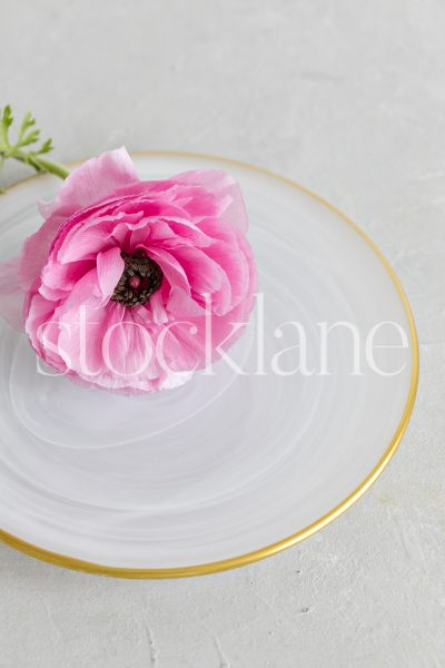 Vertical stock photo of a white gold-rimmed plate with a pink ranunculus flower.