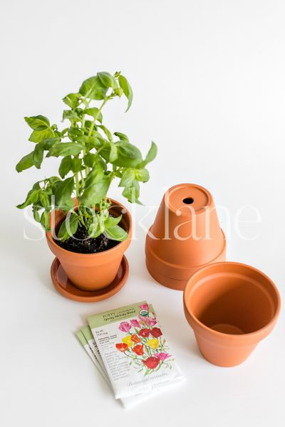 Vertical stock photo of packets of seeds, flower pots and a basil plant.